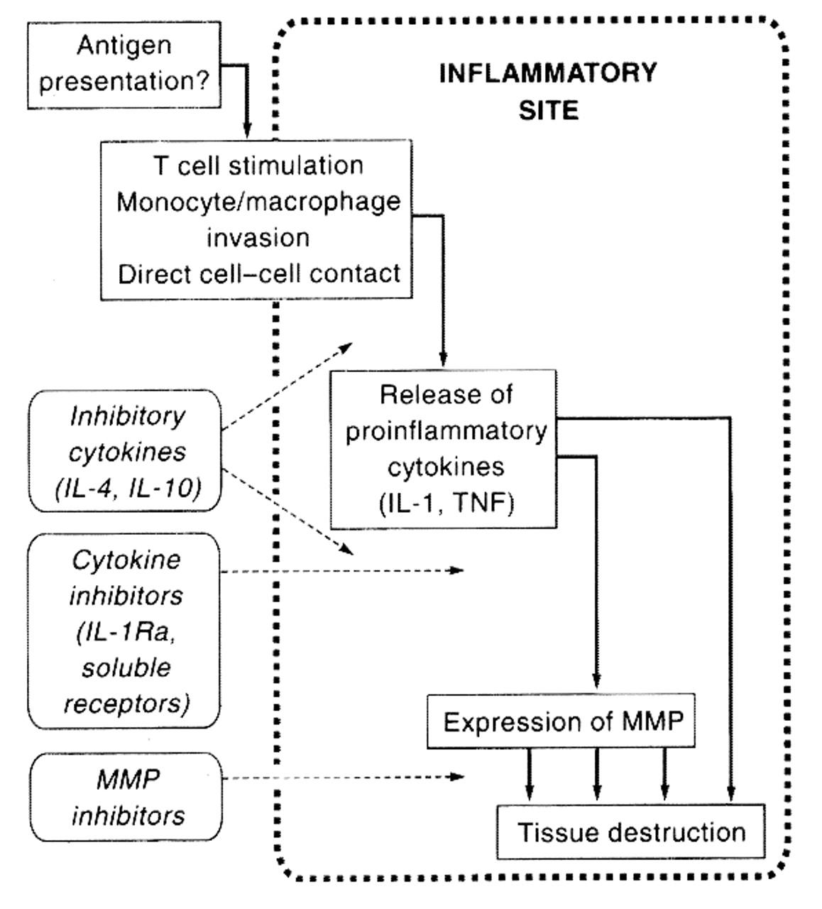 Inhibitory cytokines and cytokine inhibitors   Neurology
