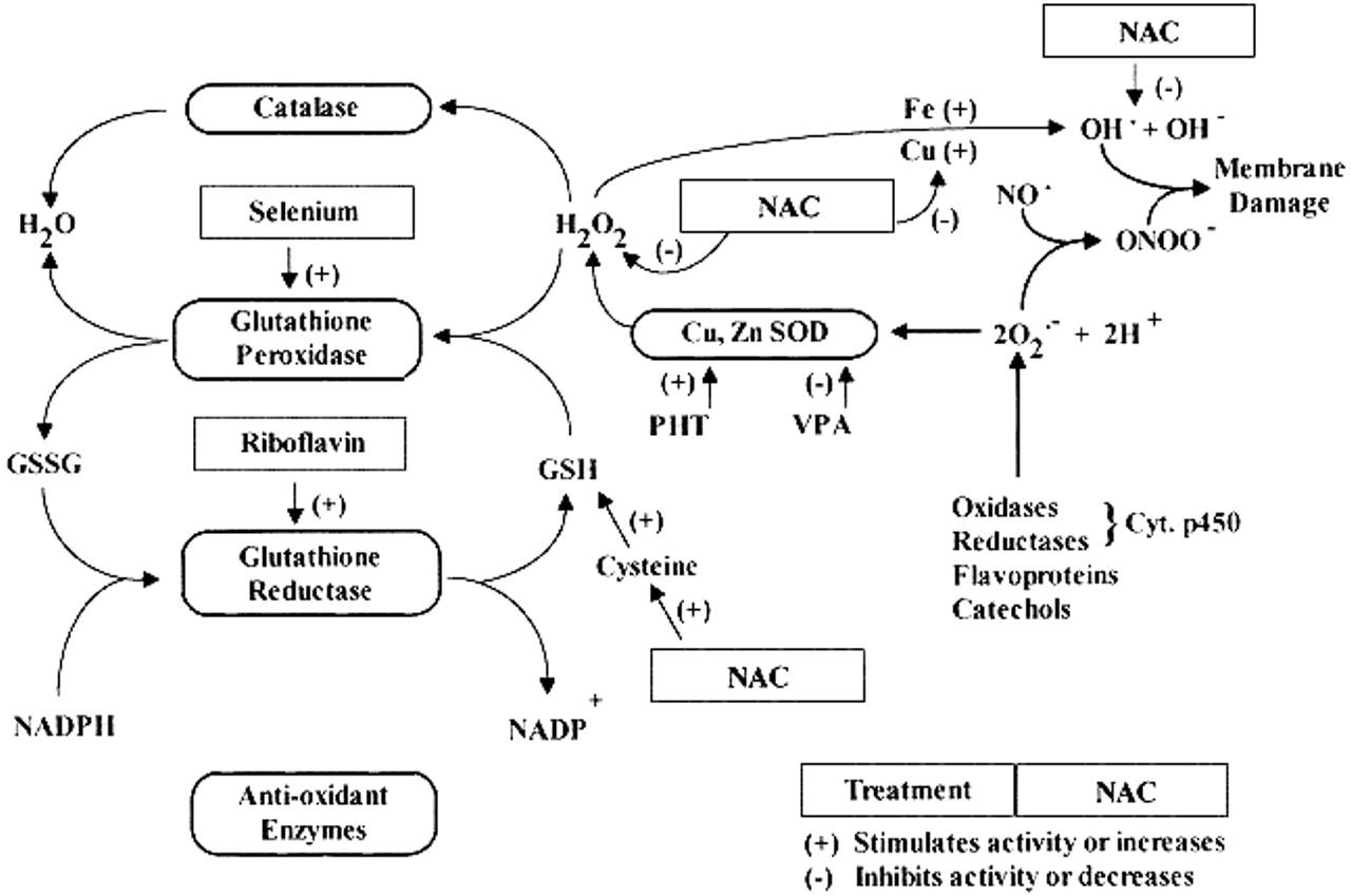 Treatment of four siblings with progressive myoclonus