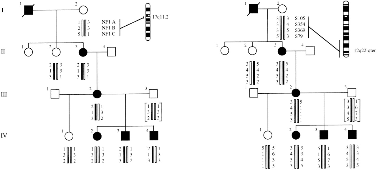 Noonan Syndrome Chromosome