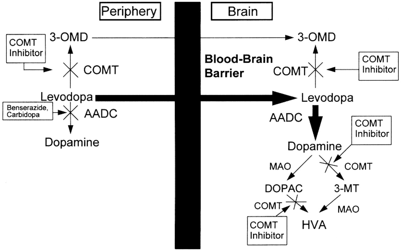 COMT inhibition | Neurology