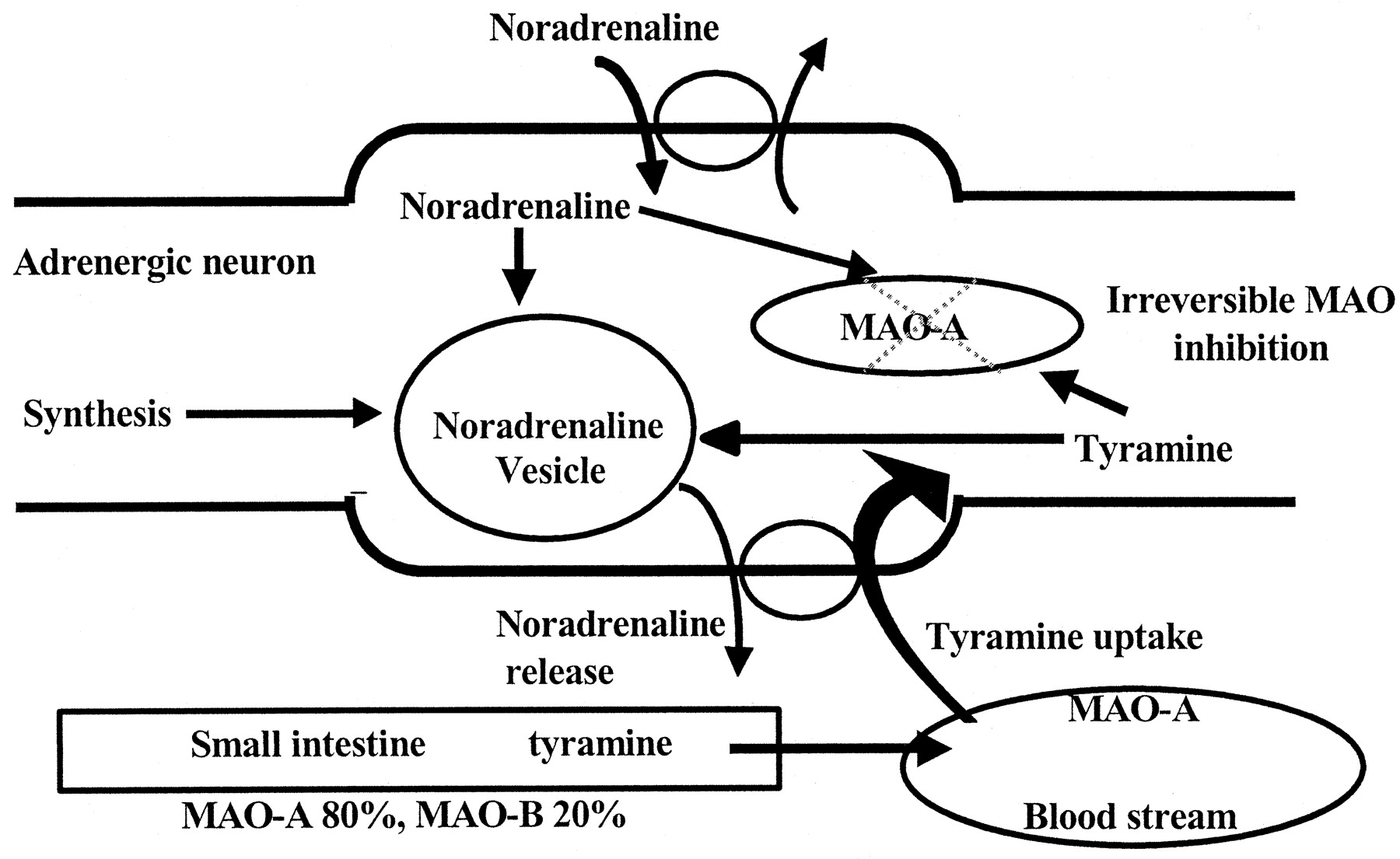 a review of the mechanisms and role of monoamine oxidase inhibitors