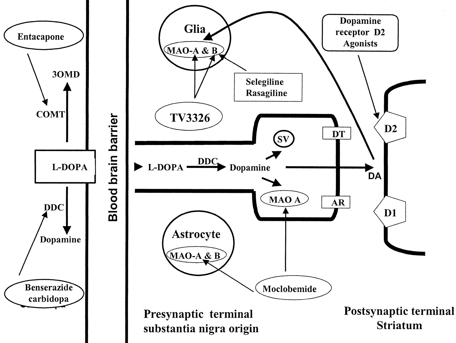 A review of the mechanisms and role of monoamine oxidase