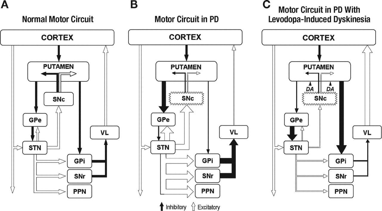The Scientific And Clinical Basis For Treatment Of Parkinson Wiring Diagram Courtesy Daniel Stern Lighting Download Figure