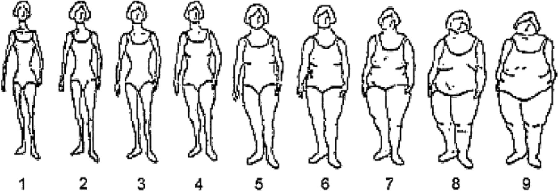 body size pictures - Timiz.conceptzmusic.co