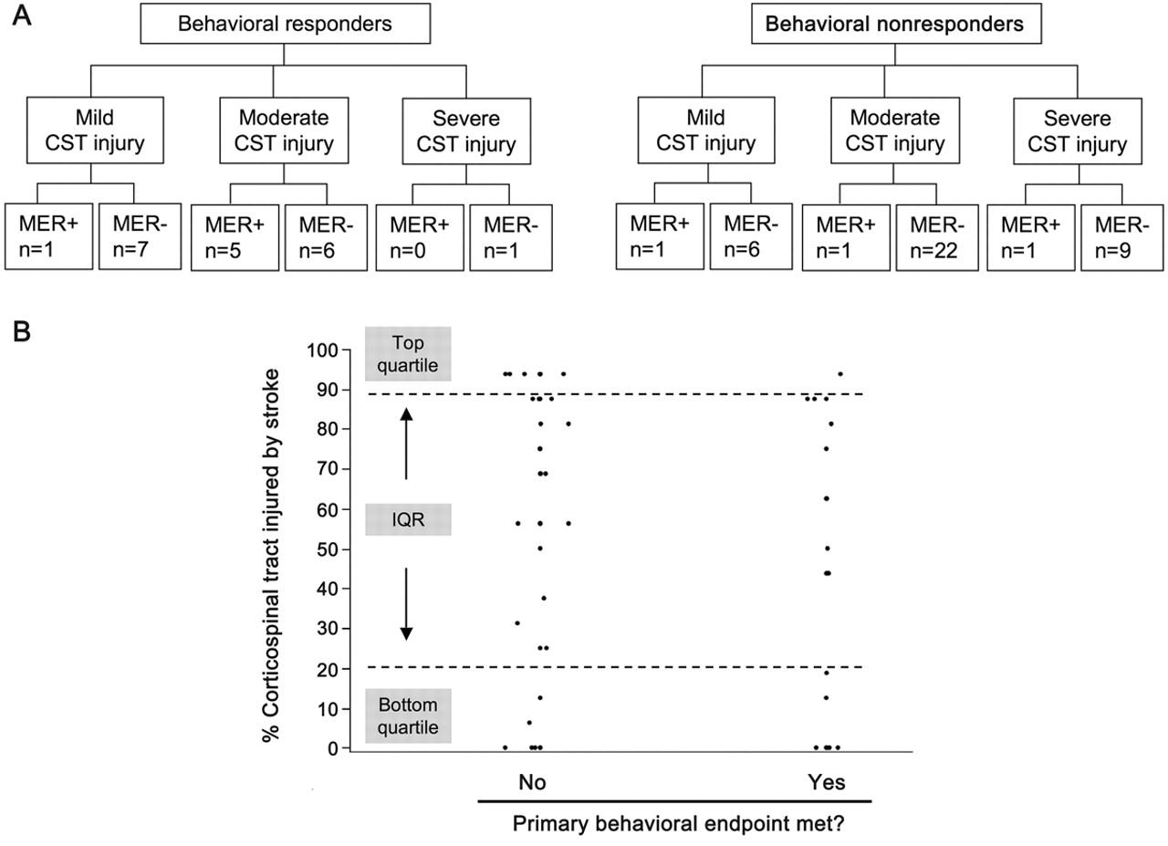 Anatomy and physiology predict response to motor cortex stimulation ...