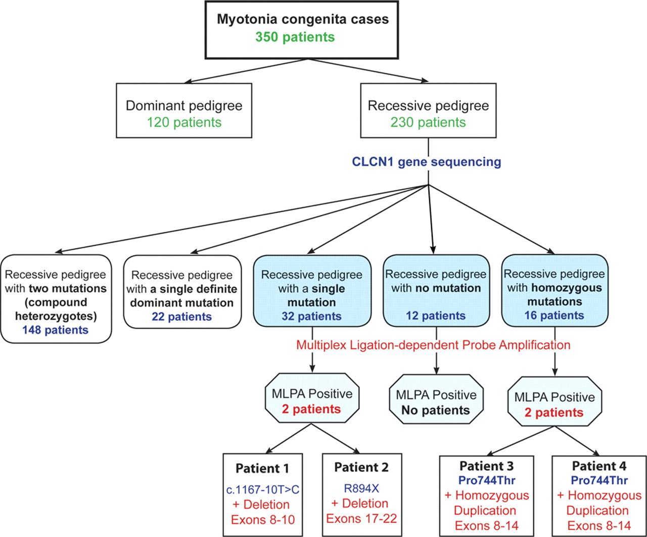 A new explanation for recessive myotonia congenita neurology download figure nvjuhfo Image collections