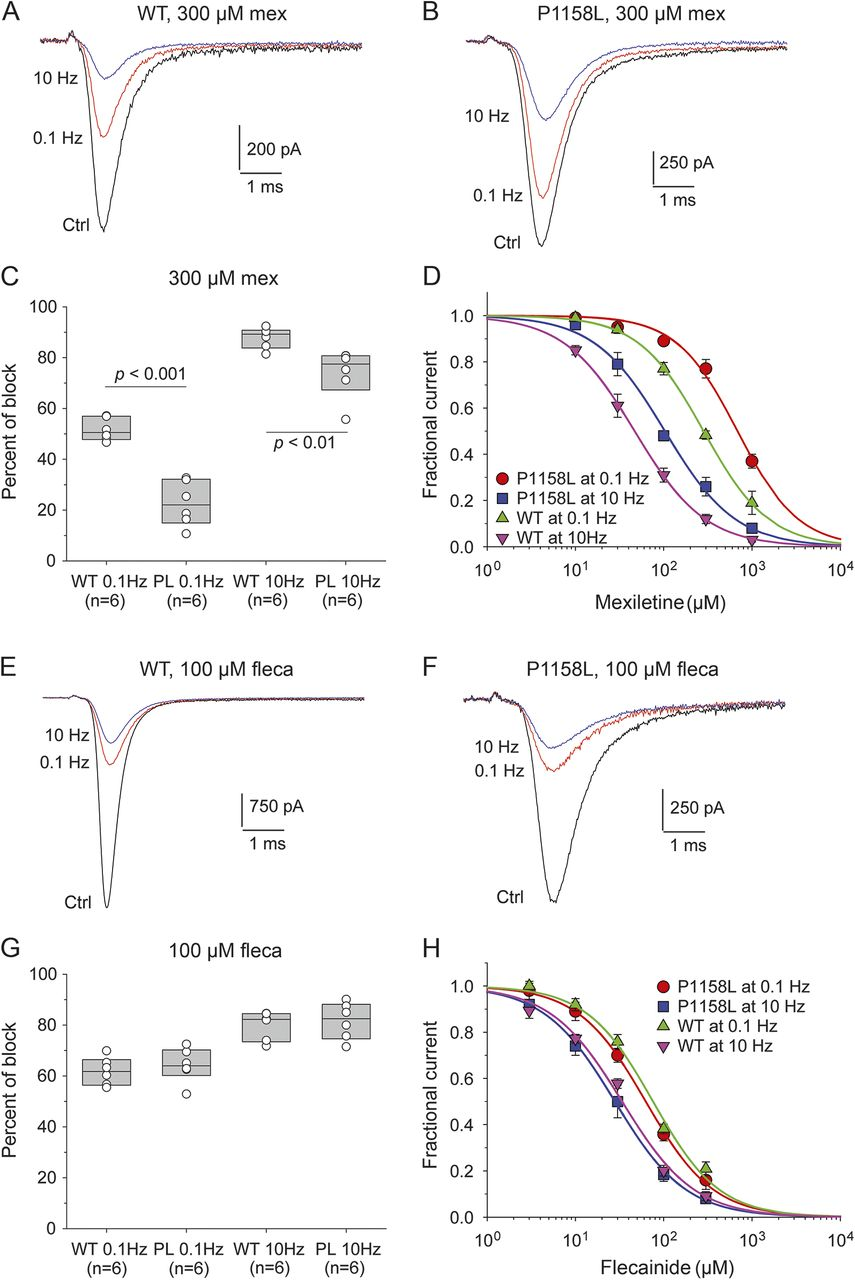 Translational Approach To Address Therapy In Myotonia Permanens Due Salt Taster Circuit Download Figure