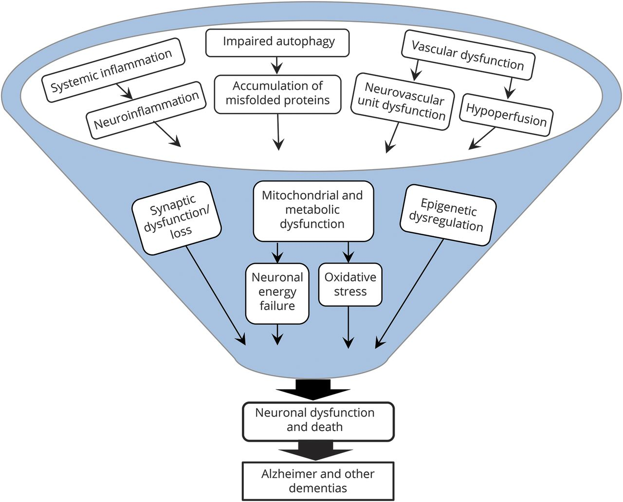 Translating the biology of aging into novel therapeutics for