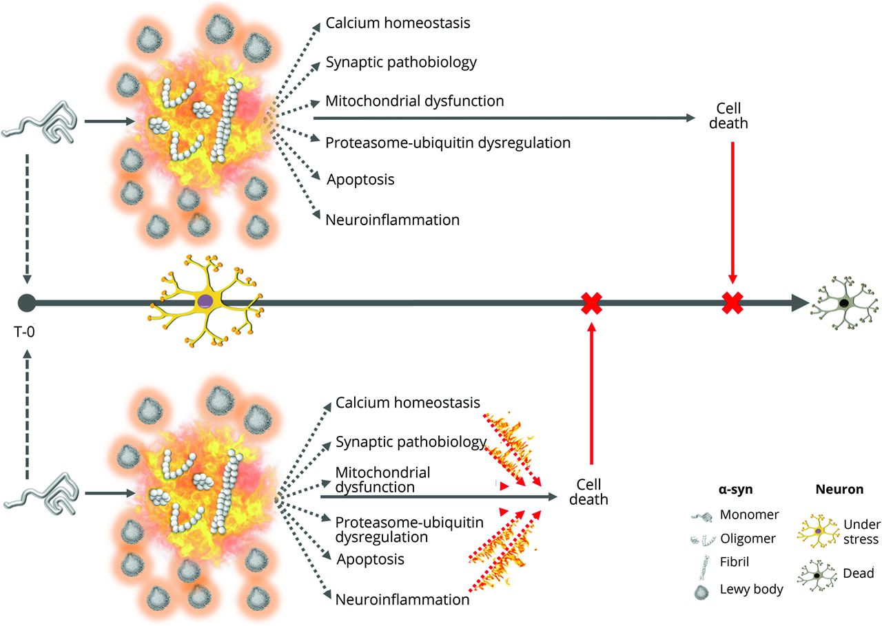 Revisiting protein aggregation as pathogenic in sporadic