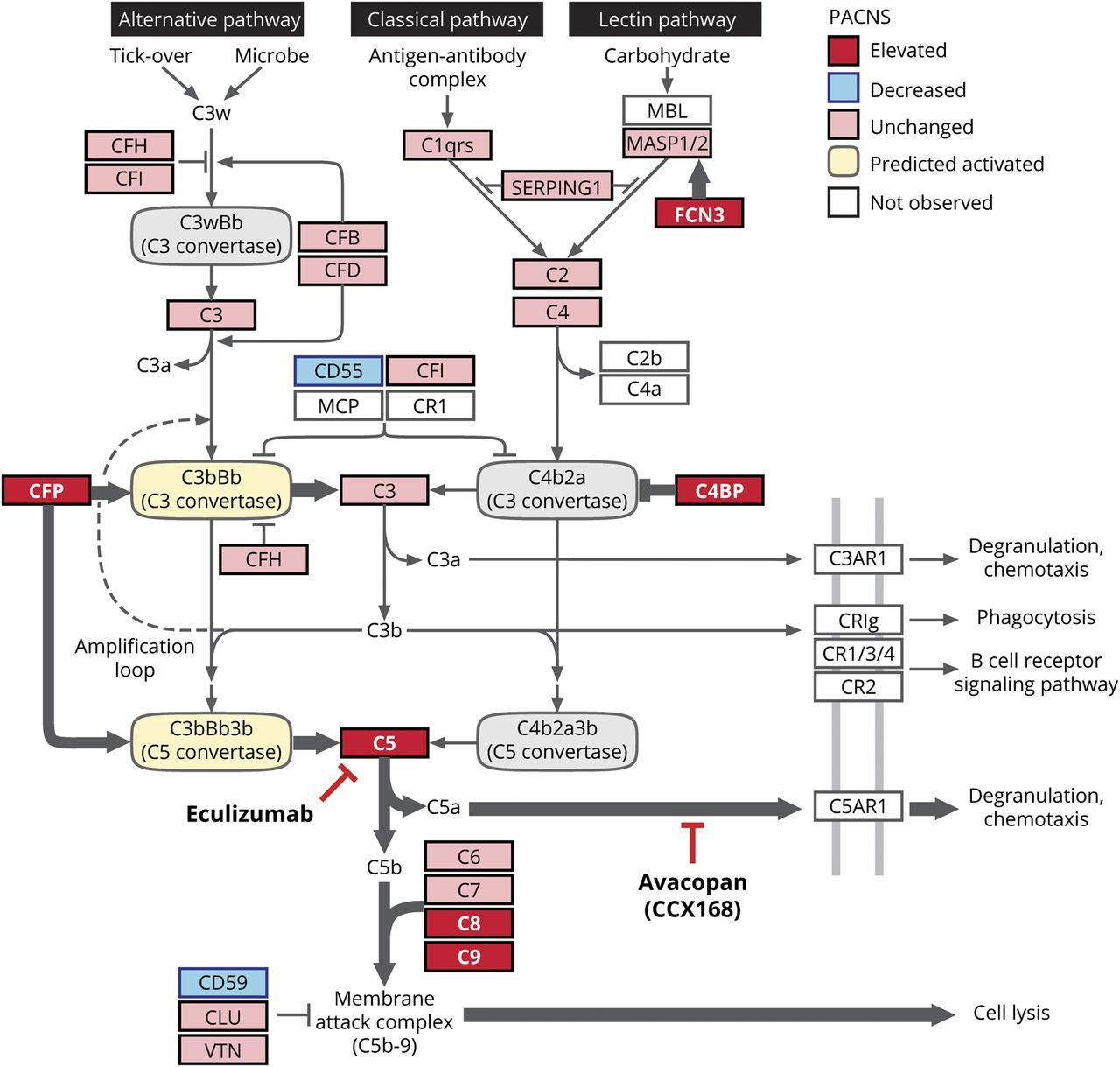 Exploratory proteomic analysis implicates the alternative complement